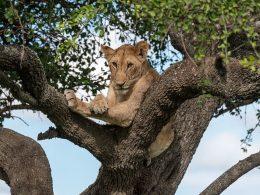 Quelques infos pratiques sur l'organisation d'un safari en Tanzanie